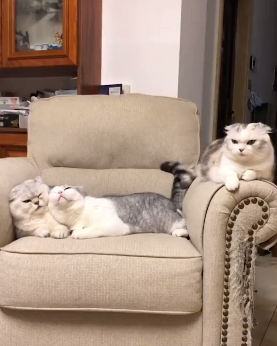 Me and my crush (I'm the one on the sofa armrest)  @MeowedOfficial https://t.co/GqYDOpOX0C
