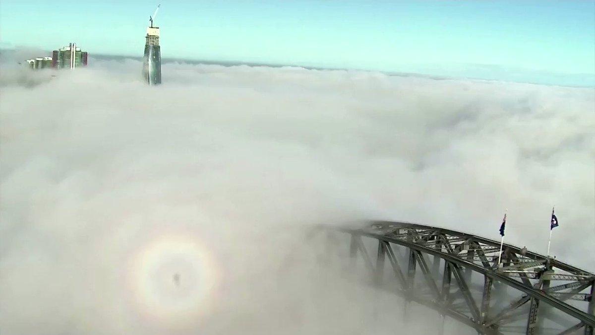 Image for the Tweet beginning: ICYMI: Fog shrouds the Sydney