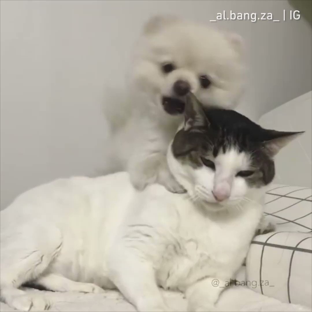 When an extrovert tries to befriend introverts.  By _al.bang.za_ | IG https://t.co/c30L095jeA