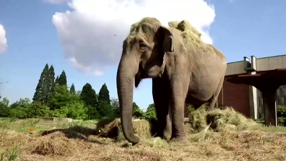 Big celebration for a big birthday as elephant at Sofia zoo turns 57 https://t.co/bgtBlJqUB1