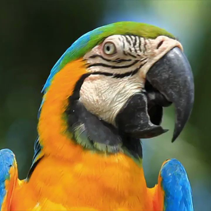 Marvelous facts about macaws. ☺️