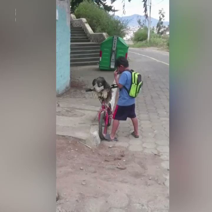 WATCH: A video of a boy in Ecuador putting a face mask on his dog and himself as they prepare for a bike ride is viral https://t.co/LylXc9AOGV