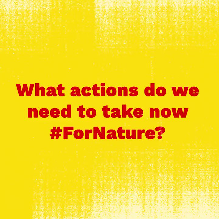 It's time to reimagine our relationship to nature. The time for action is now. This #YouthDay, young activists around the world are sending an open letter to world leaders to act #ForNature. Join us now: fornature.undp.org #Youth4GlobalAction #31DaysOfYOUth