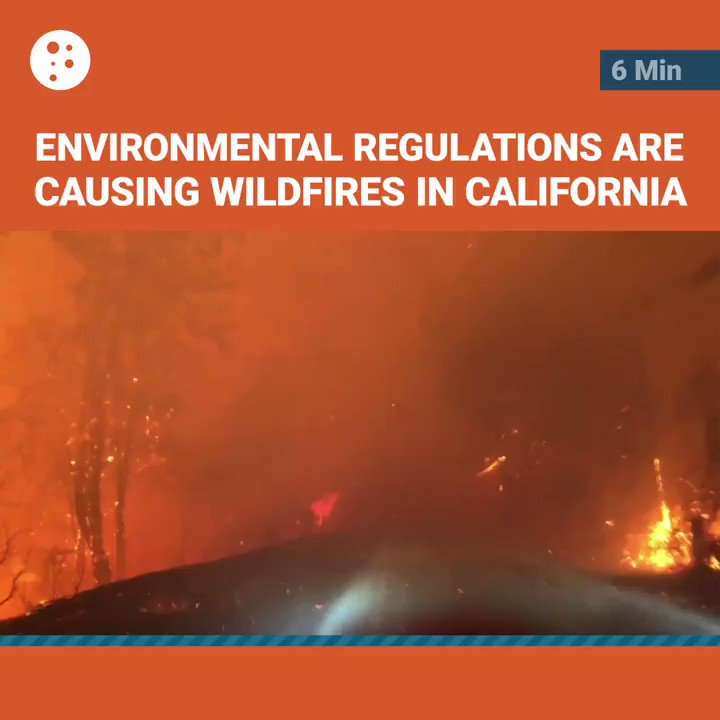 Image for the Tweet beginning: Here's how mismanagement of forests