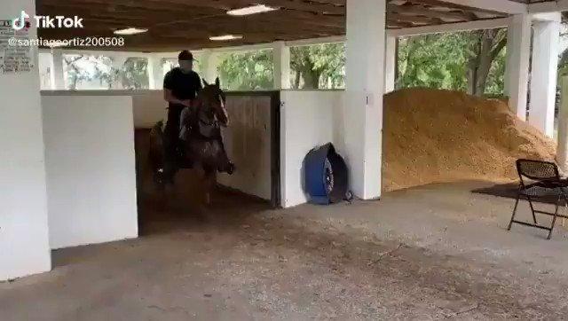 スペイン式の乗馬訓練、めっちゃ動いてるのにスローペース