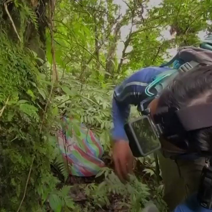 Plant hunters in Taiwan are trying to collect and preserve rare plant species https://t.co/6LAM0oNBbh https://t.co/W58sM9nhVh