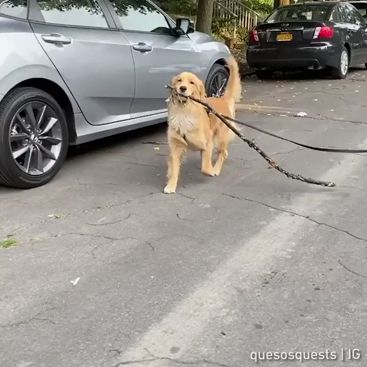 Big stick energy  📹 quesosquests | IG https://t.co/wBmLFnVePa