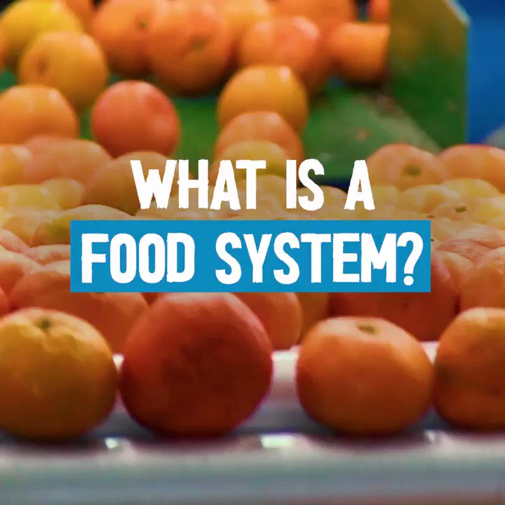 """The term """"food system"""" refers to the constellation of activities involved in producing, processing, transporting and consuming food.  #Foodsystems touch every aspect of human existence.  Here's what you need to know 🎦 ⬇️"""