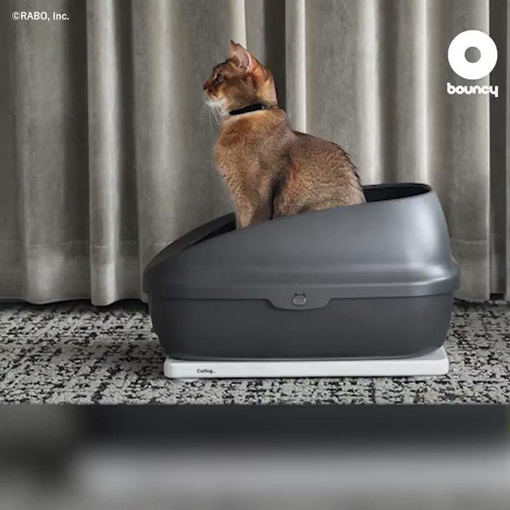 トイレが猫の診療所!?健康状態を記録して、テクノロジーで猫を見守る「Catlog Board」 by RABO, Inc.詳しくはこちら👉#猫 #健康