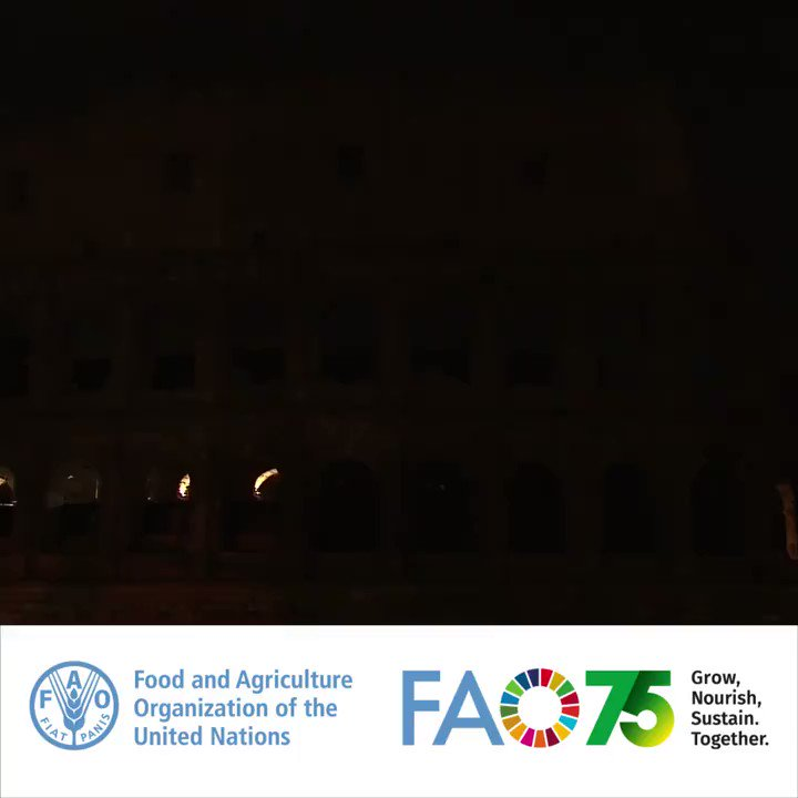 Rome's Colosseum lit up to mark FAOs 75th Anniversary! On our birthday, #WorldFoodDay, we paid tribute to all our #FoodHeroes who help to grow, nourish & sustain our world! Watch the show 👇 #UNDay #FAO75
