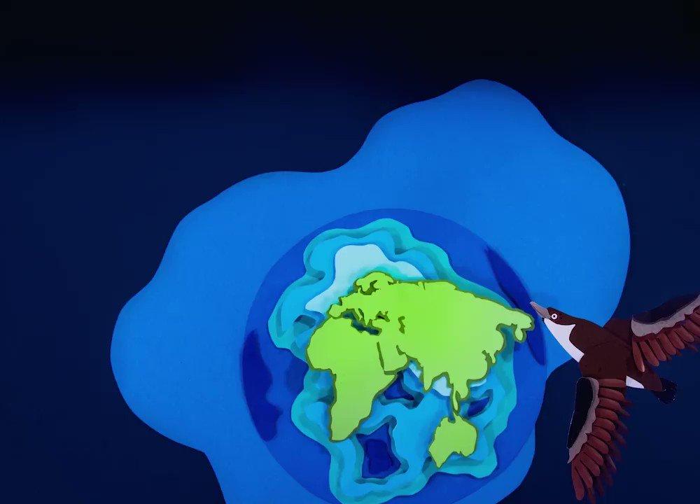 Image for the Tweet beginning: Seabirds, dolphins, sea turtles🐦🐢🐬...