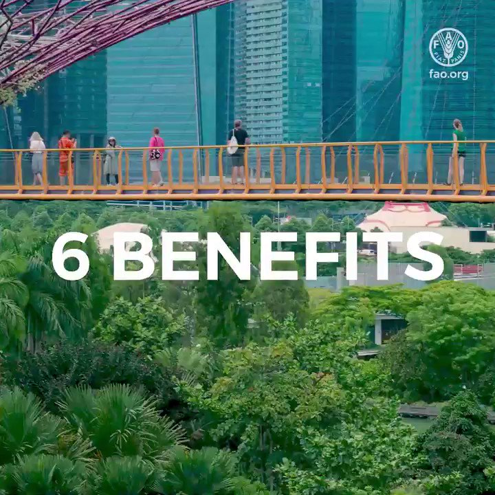 Cool cities, captured carbon, and calm communities – there are vast health and environmental benefits of urban trees.