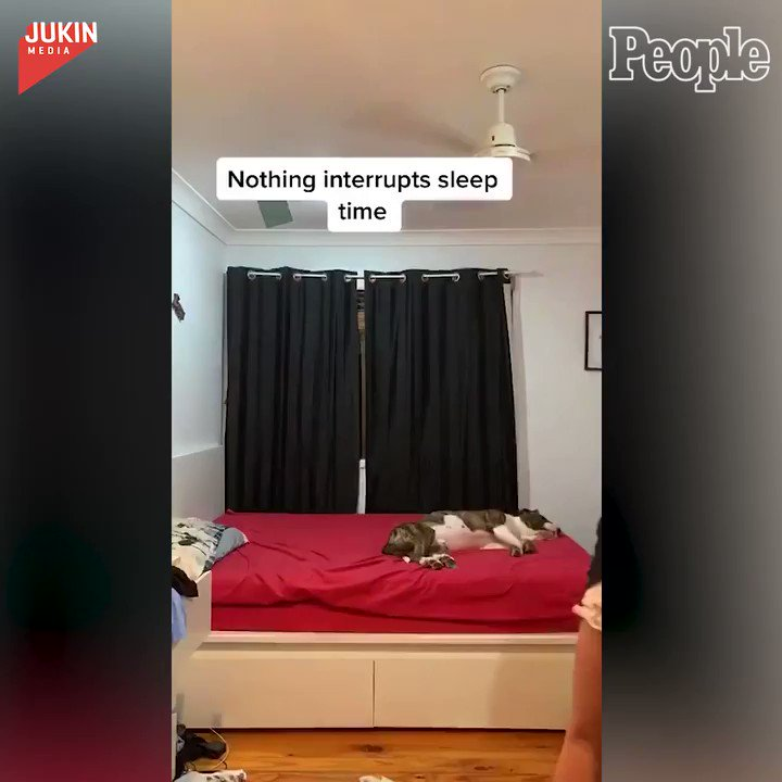 Nothing's getting in the way of this pup's nap time! 😂