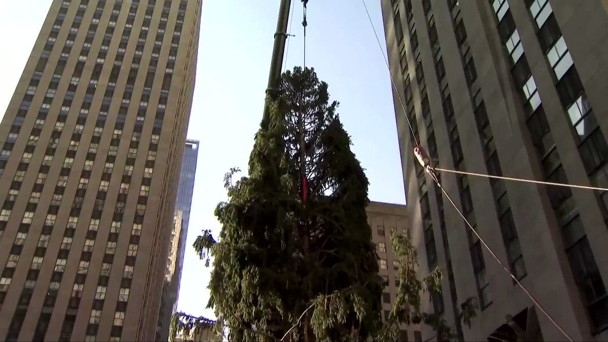 ICYMI: New York City received some much-needed holiday cheer with the arrival and installation of a giant Christmas 🎄 at Rockefeller Center https://t.co/KYg09bgZCW https://t.co/1KpqHAx6tu