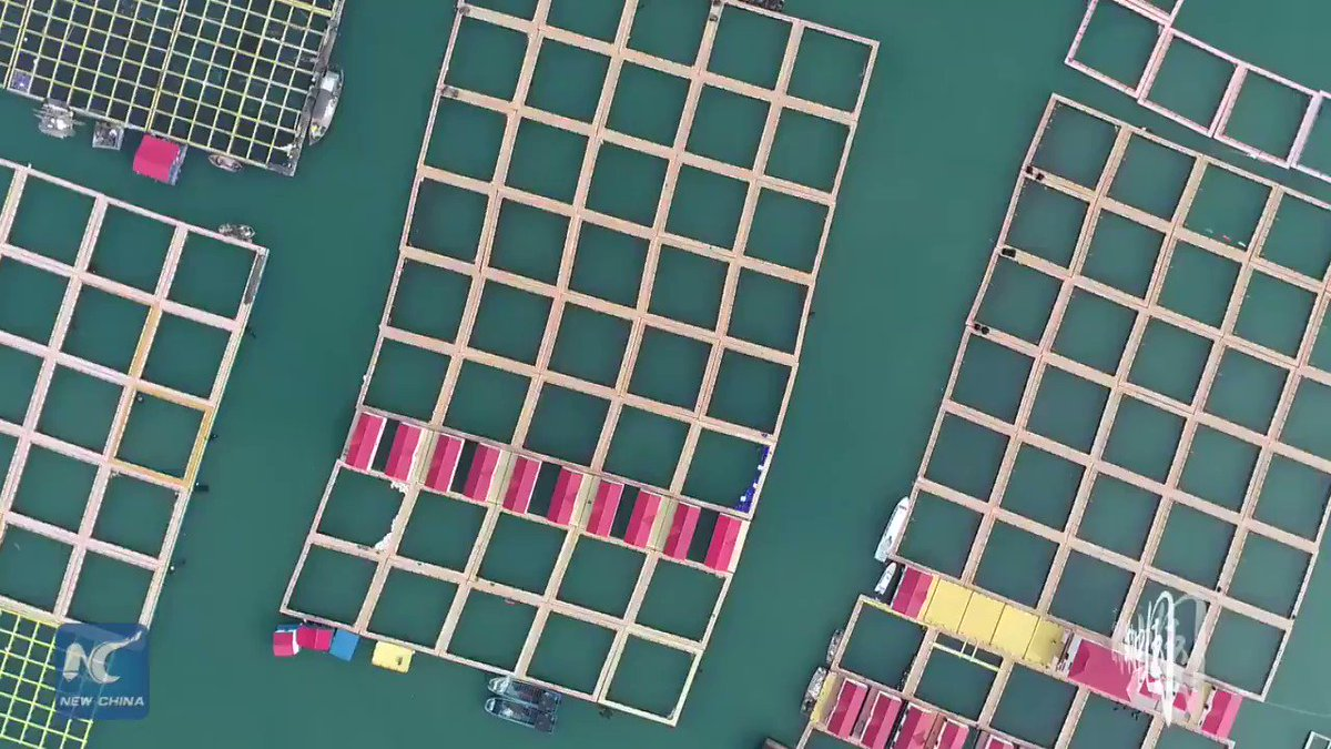 Since mid-2018, authorities in Xiapu County, southeast China's Fujian province have taken measures to promote transformation and upgrade of mariculture industry including upgrading breeding rafts, replacing worn-out floating balls and expanding shipping lanes.#ChinaFromAbove