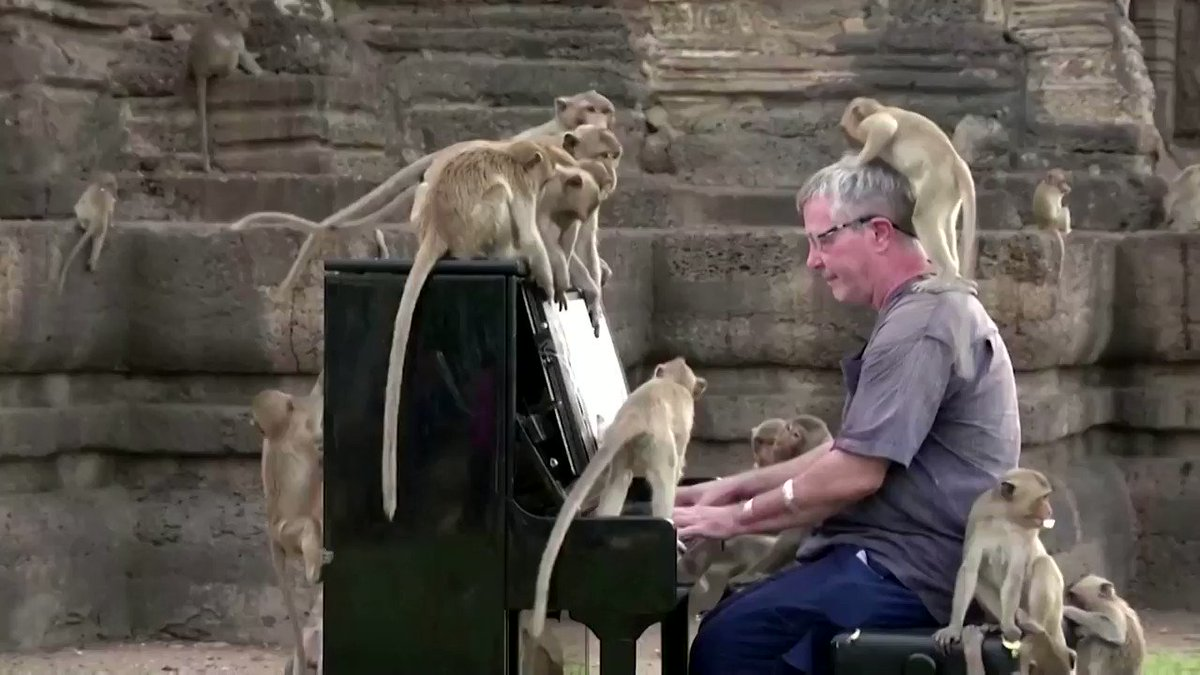 WATCH: British musician Paul Barton plays the piano to soothe Thailand's hungry monkeys https://t.co/vRHvCtMmbY https://t.co/I9RBFbfdGv