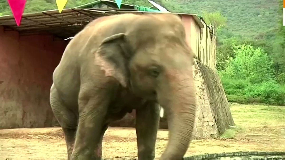 ICYMI: Pakistans lonely elephant Kaavan 🐘 is set for a new life in an elephant sanctuary in Cambodia reut.rs/374VzMK