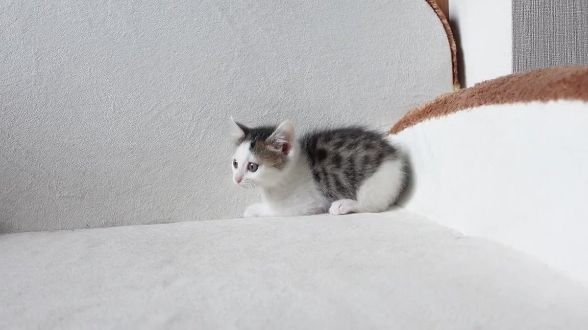 Meet Miri - the newest member of internet famous Maru cat's family →