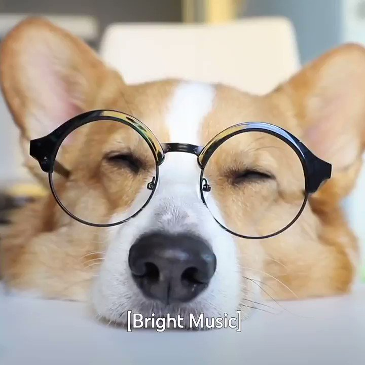 Who wants to have a video conference with Topi The Corgi? 🐶💻 →