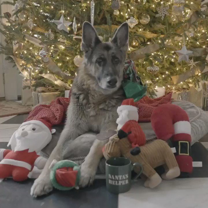 A very special Christmas message from Champ and Major.