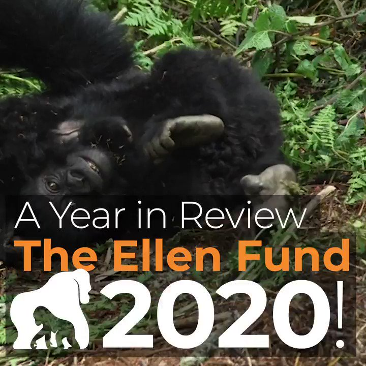 Thanks for joining us on this journey. What a year!  #thankful #weneedgorillas #gorilla #conservation #2021