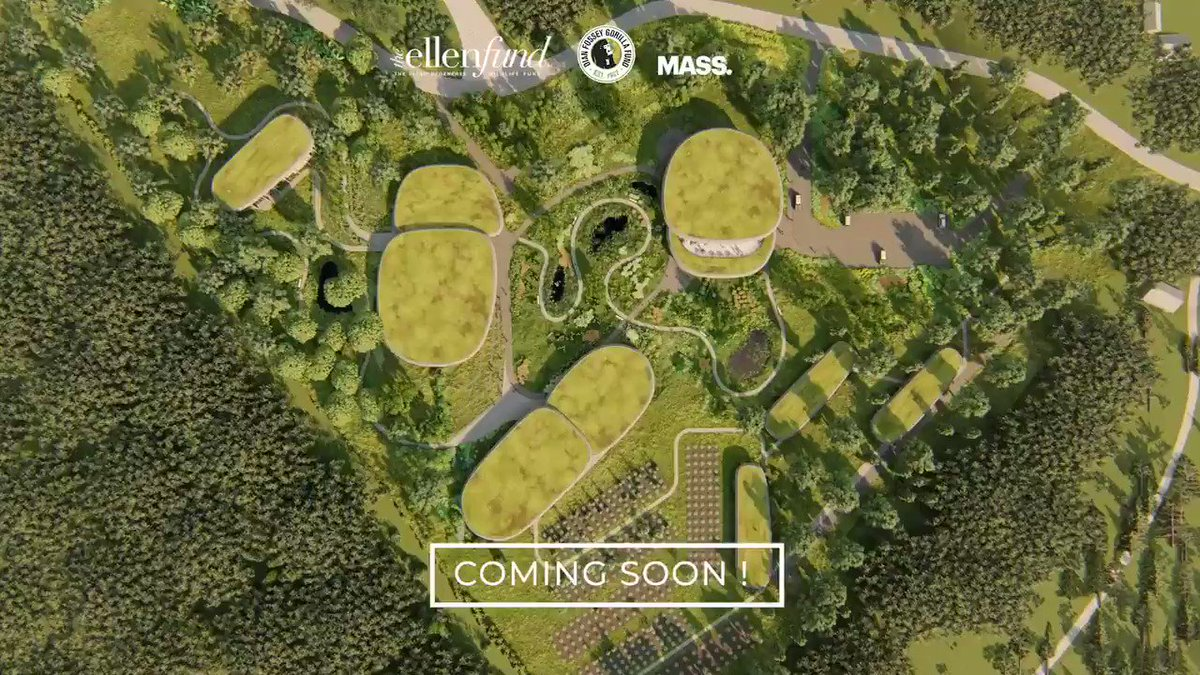 Good news! THIS is the year the Campus opens! We're excited to open to visitors in September 2021. 🎉🎉 📷:@massdesignlab #GoodNews @savinggorillas #weneedgorillas #gorilla #conservation