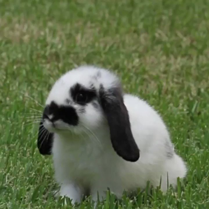 Replying to @UberFacts: Facts about commonly confused creatures 😲 🐰