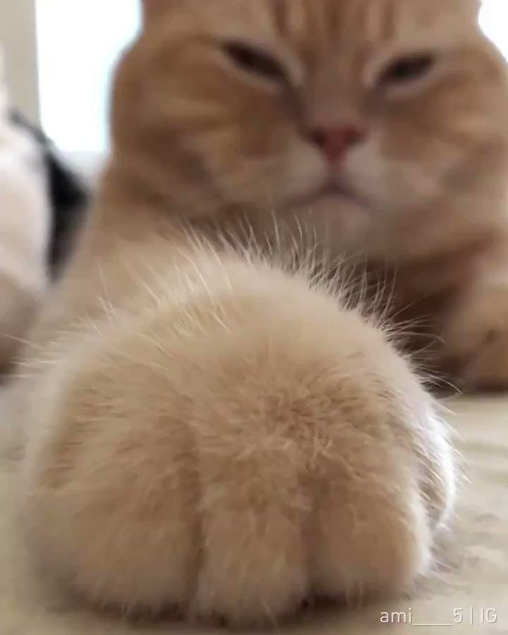 Touching floof is so satisfying  📹 ami____5 | IG