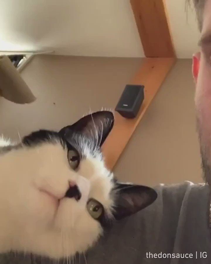 Find someone who loves you like this cat loves his hooman  📹 TheDonsauce | IG