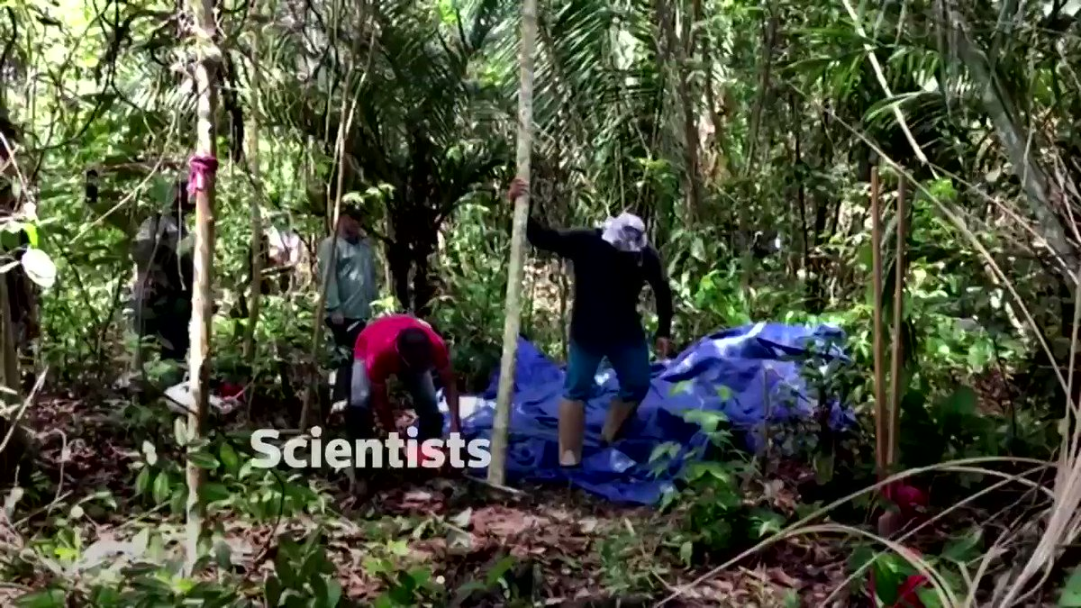 ICYMI: Scientists are chopping trees in the Amazon basin to measure how different forests absorb carbon dioxide