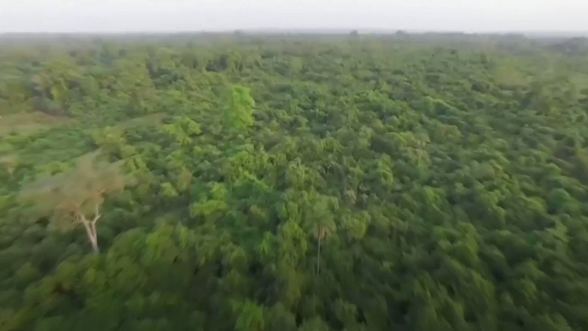 WATCH: The aim of the 'Great Green Wall' is to halt desertification by growing the largest living structure on earth in Africa's northern Sahel region. See the progress