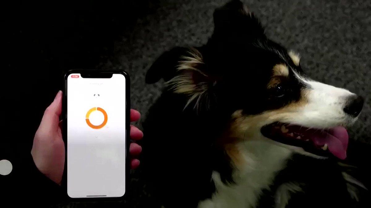 WATCH: This South Korean smart collar translates dog barks