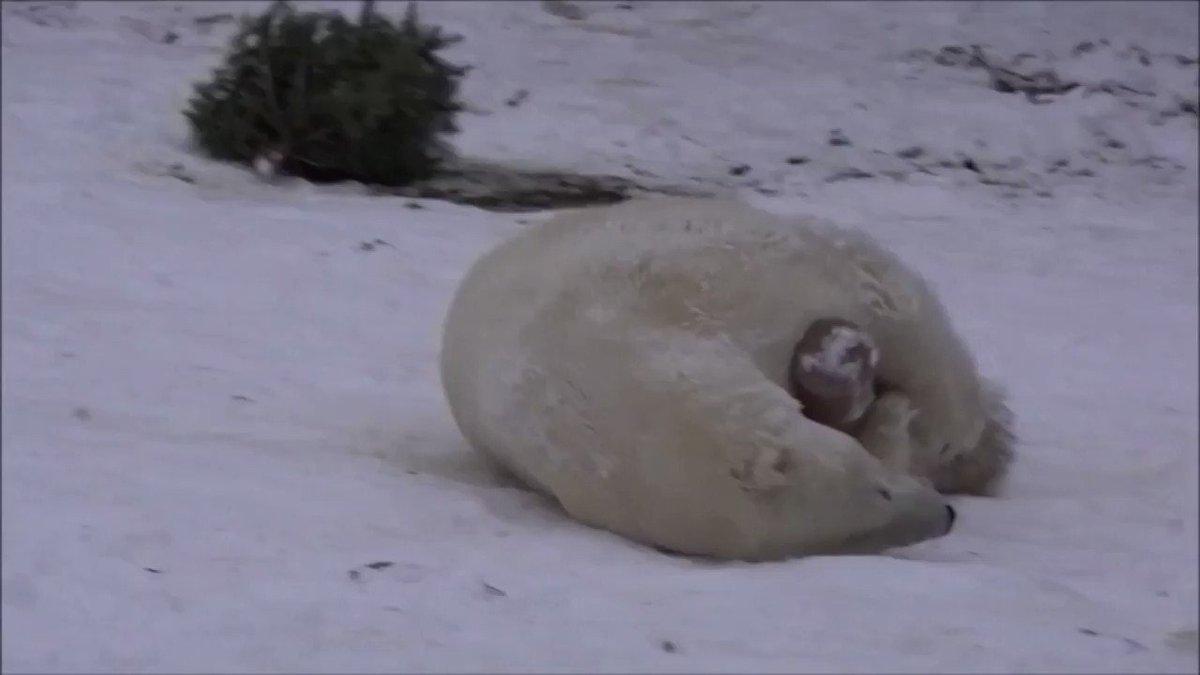 Animals enjoy a snow day at Tallinn Zoo ❄️ https://t.co/QsHt0Dcau9