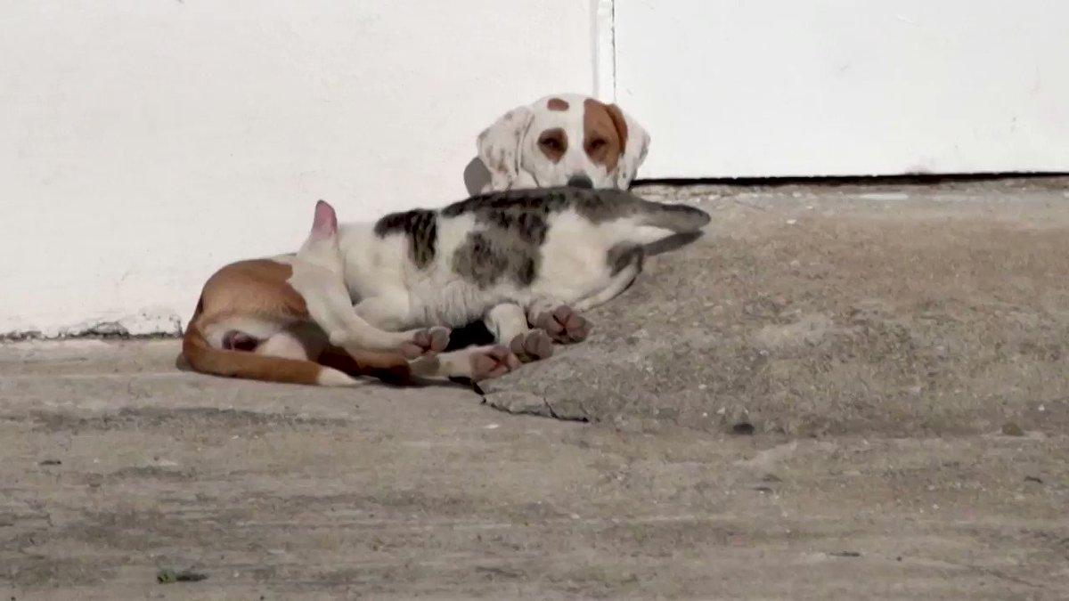 WATCH: Dog nurses her cat friends at a farm in Greece 🐕 🐱