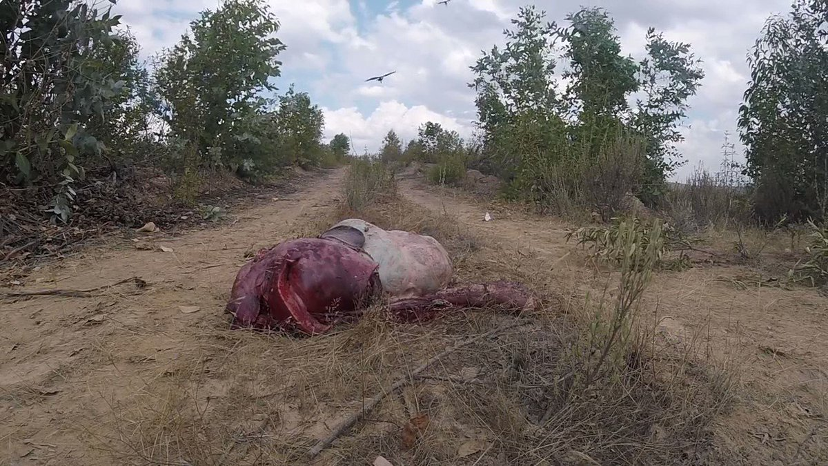 I absolutely love vultures...they are nature's cleanup crew.   Watch how they cleanup this deer carcass in less than 60 seconds.   But vultures are in deep trouble and if we lose them, our eco systems will collapse.   Read this thread to learn more: