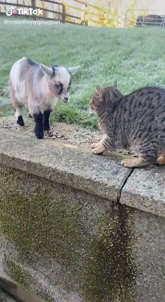 かわいい靴下履いた子に追われる猫