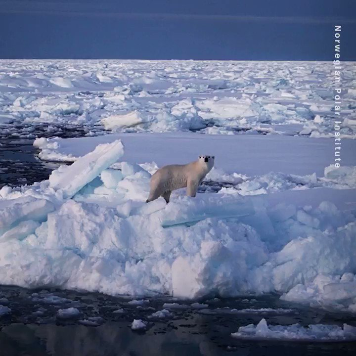 Every morning, this scientist receives a batch of emails from several female polar bears in the Arctic. They're among dozens of bears who have been fitted with a tracking collar to monitor their movements and their responses to climate change: https://t.co/Y0e0K28E1f #CallToEarth https://t.co/Cj7akujGw7