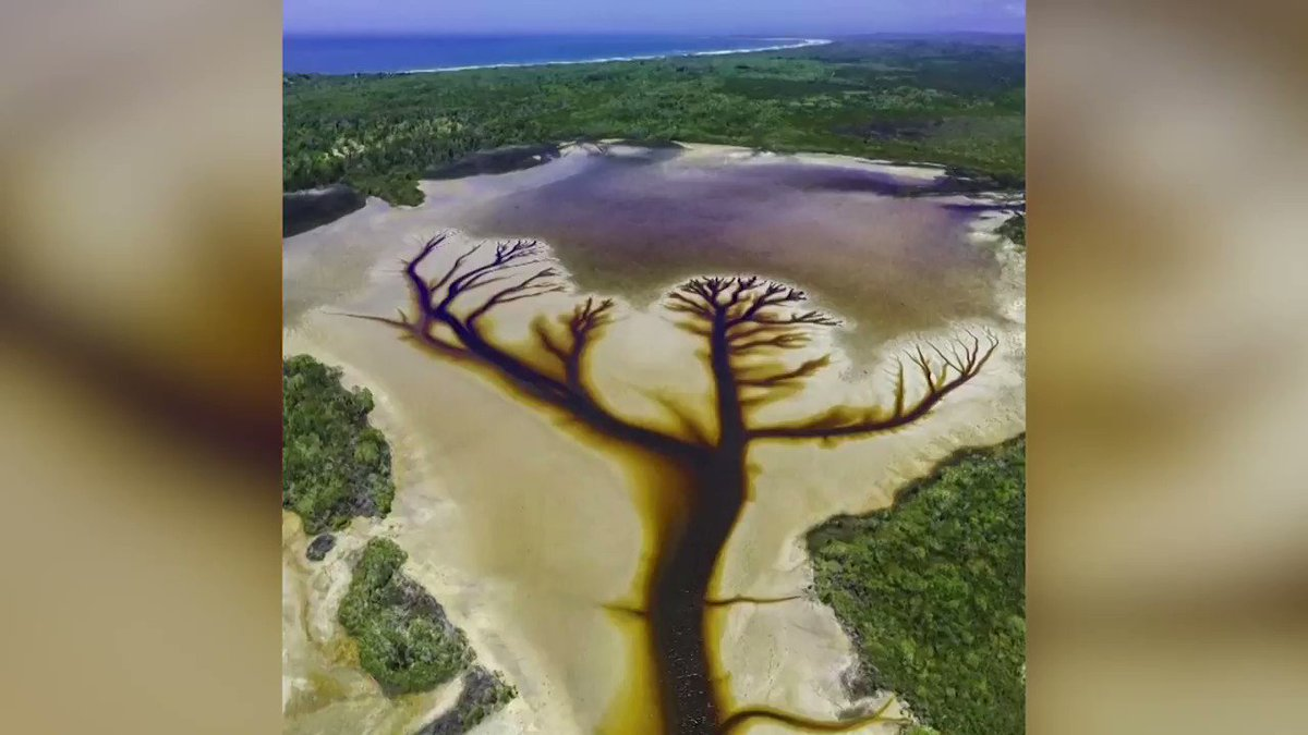 Drone photos and video captured over the course of six months show what resembles a remarkable depiction of a tree in Lake Cakora, Australia https://t.co/vifa6DDOg6
