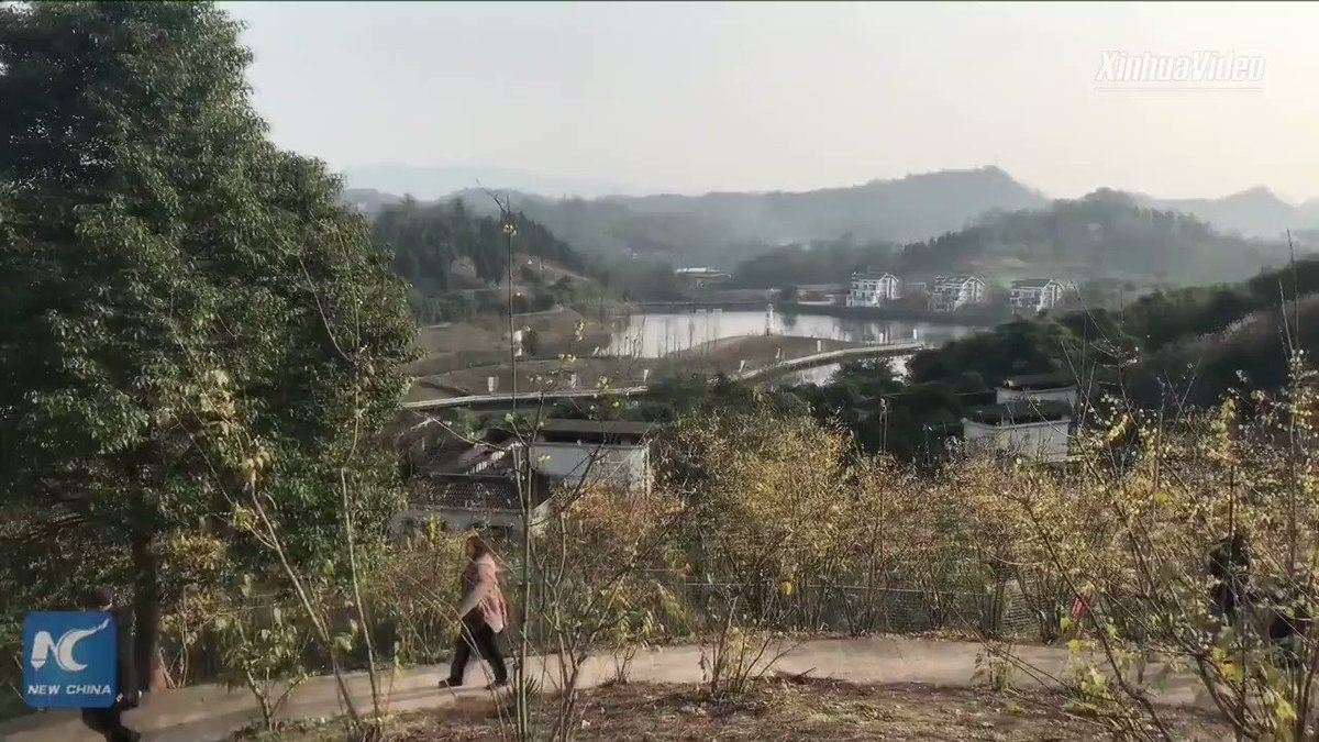 A small village in southwest China's Chongqing is thriving thanks to its flower and essential oil industry
