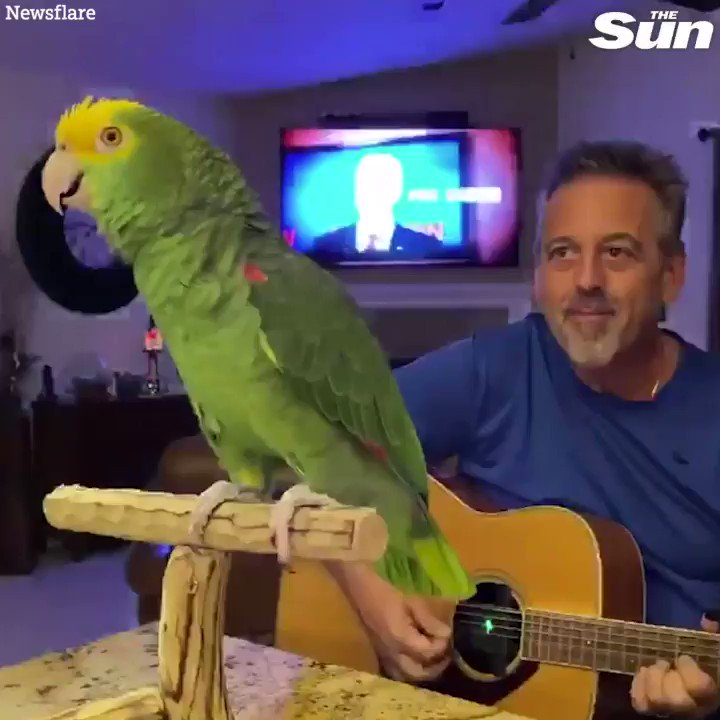 Guitarist bored in lockdown trains his parrot to sing along to The Beatles, Bon Jovi and Coldplay 😂