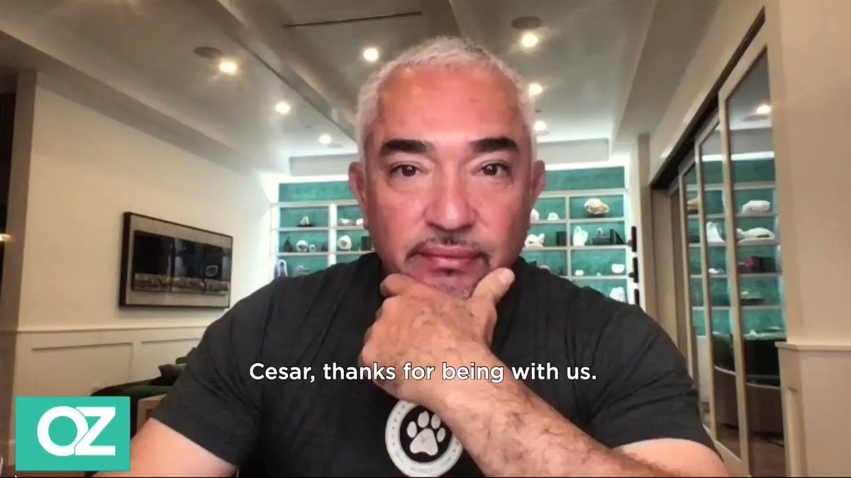 Here are the 3 things that might provoke a dog to attack, according to The Dog Whisperer, @cesarmillan. https://t.co/oh0VnbrtF0