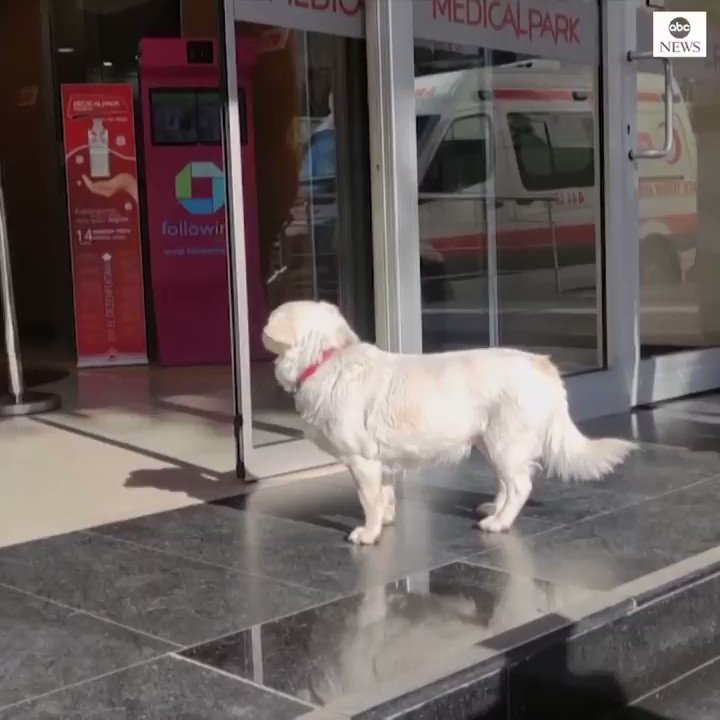 MAN'S BEST FRIEND: This devoted dog spent days waiting outside a hospital where her sick owner was receiving treatment.