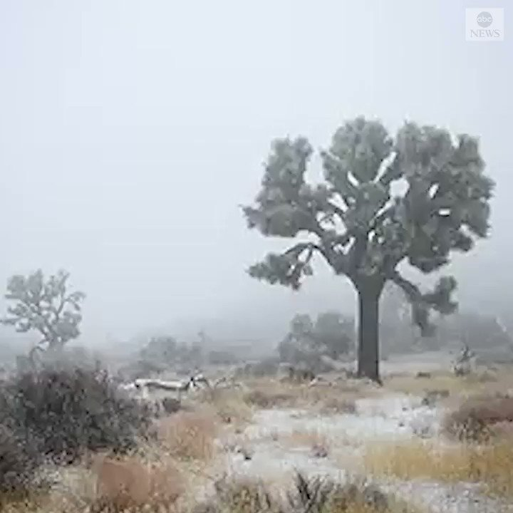 LET IT SNOW: Joshua Tree National Park saw a gentle snow fall across the area, as much of California saw a colder, wetter weather pattern.