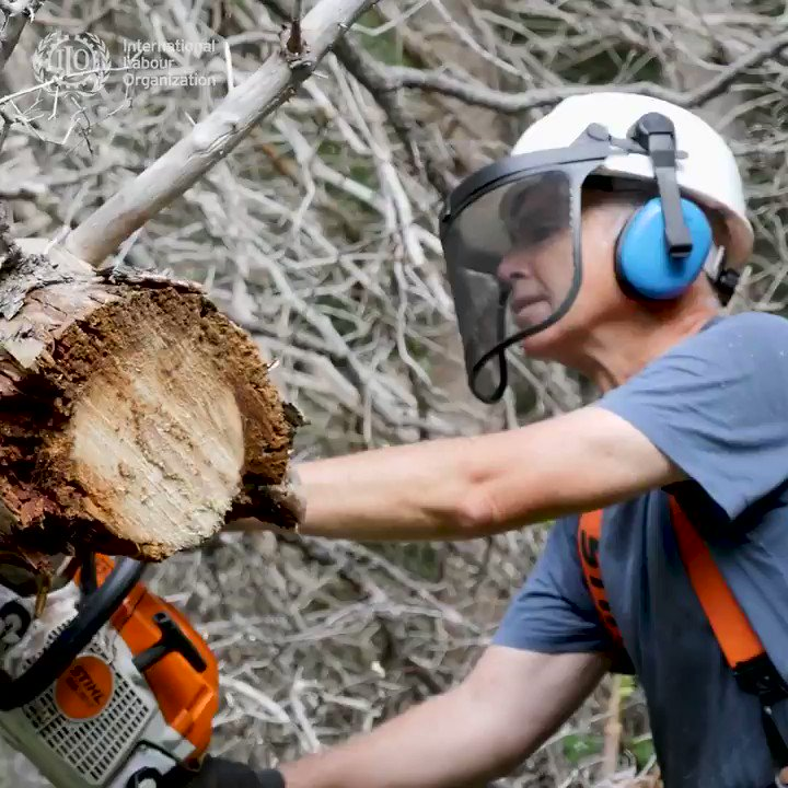 Logging operations across the world have taken on increased risk for #workers and enterprises. A joint ILO & @FAO checklist aims to prevent the spread & mitigate the socioeconomic impact of the #COVID19 crisis.  Read more: