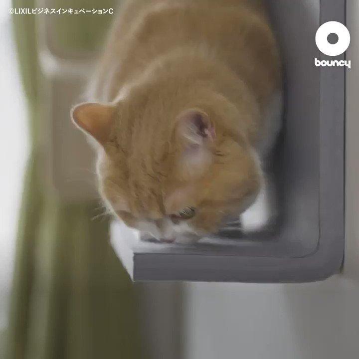 自宅の壁が猫の遊び場!LIXILが提案する優しいキャットウォール「猫壁(にゃんぺき)」by LIXILビジネスインキュベーションC詳しくはこちら👉#猫好き #ペット