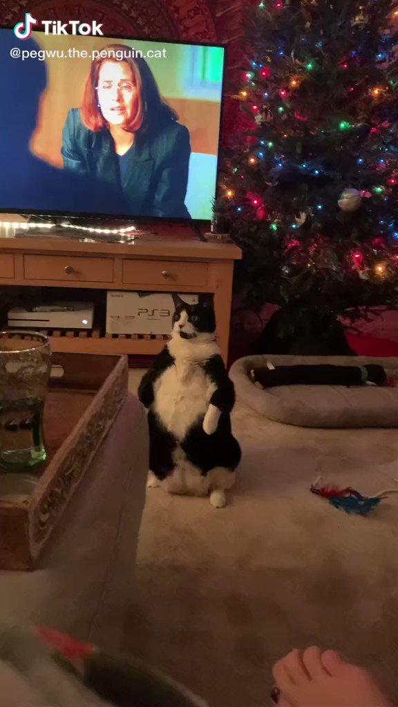 ただの猫とは思えない風格