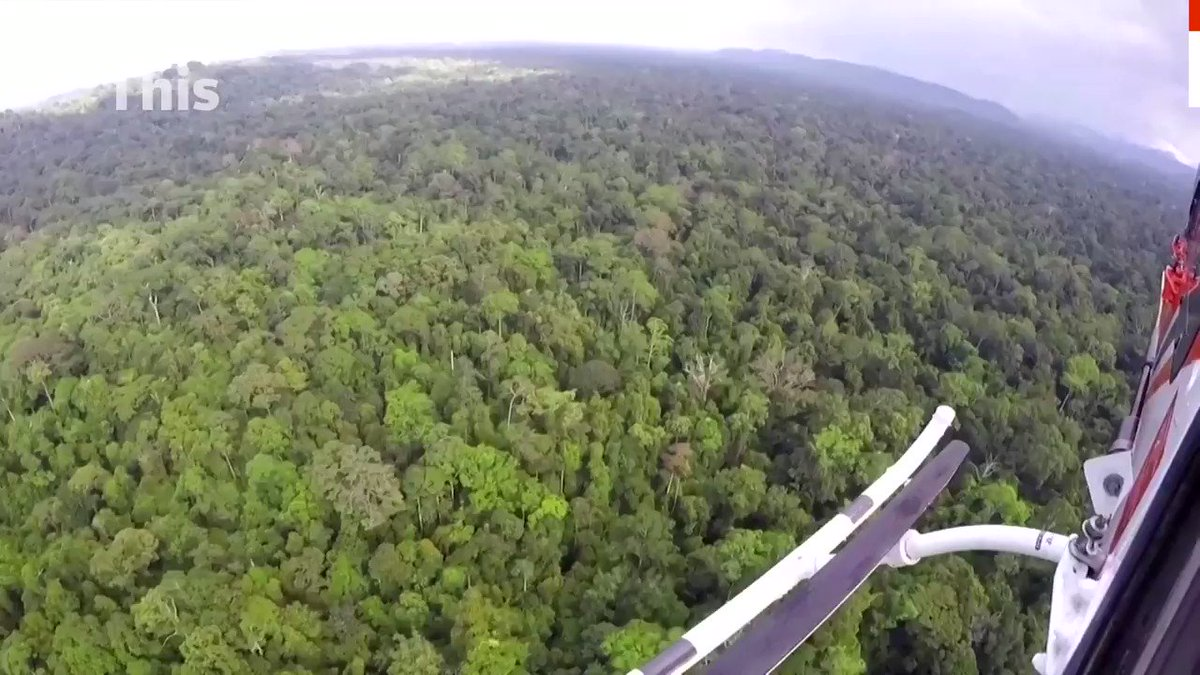 ICYMI: A helicopter released ten orangutans from an Indonesian rehabilitation center in Borneo island back into the wild https://t.co/RXL4vfQ9Sl https://t.co/hAKOZCoItk