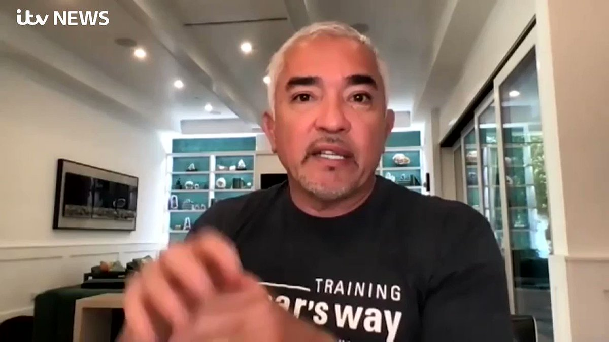 'Every time you create confusion, you create unhappiness, and then unhappiness creates chaos'  America's most famous dog trainer, @cesarmillan, told @emmamurphyitv how Lady Gaga's dogs may have reacted after they were stolen at gunpoint https://t.co/cJcqjlFrrO https://t.co/dkLwUB8LYH