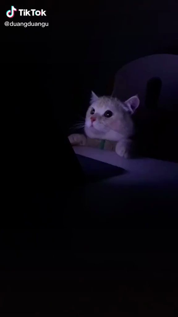 ホラー映画を見ていた猫ちゃん急に明るくなってびっくり!
