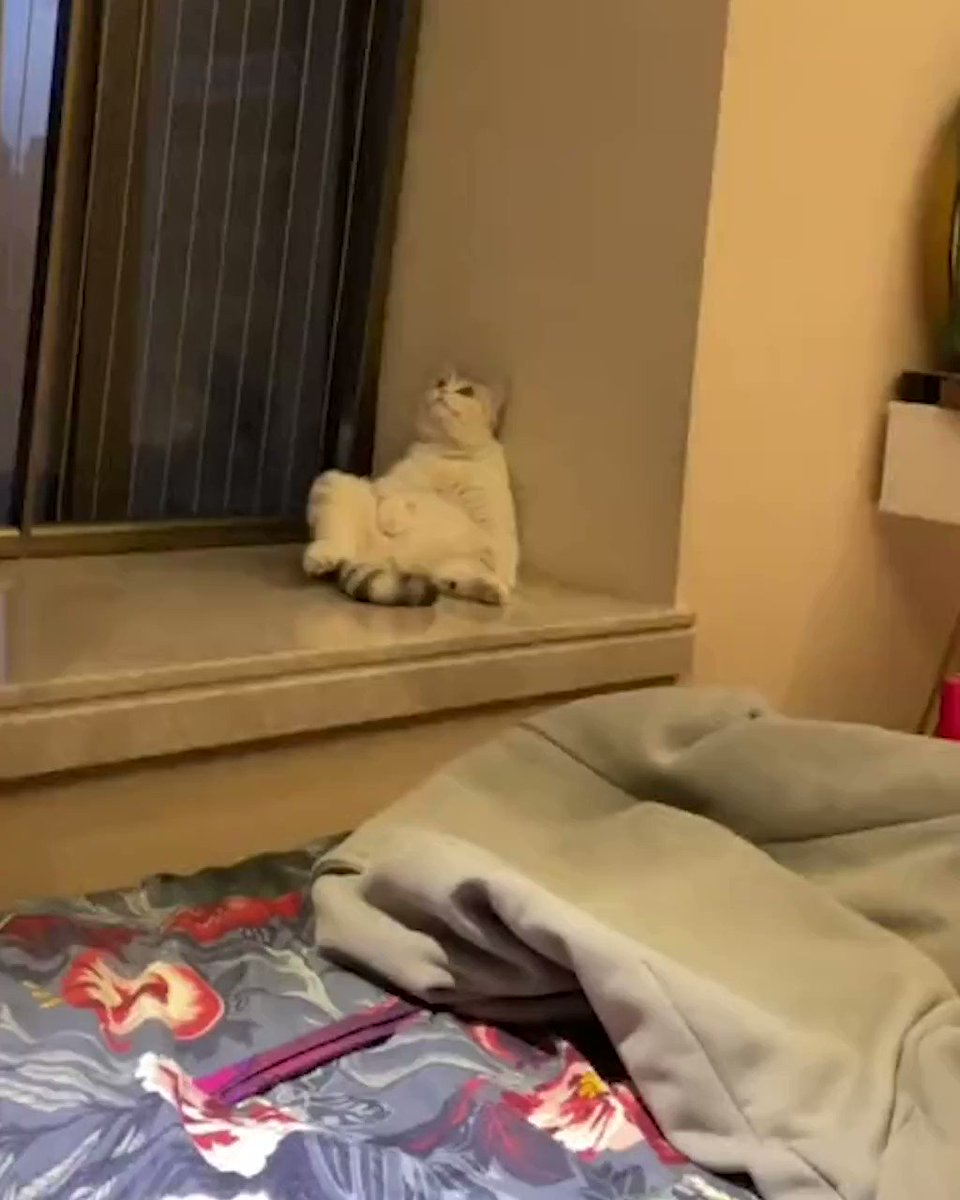 When you realize you're in the meowtrix  @MeowedOfficial https://t.co/rAkhUxmCTE